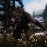 wolf1sr