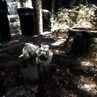 Skyrim-Собаки-3