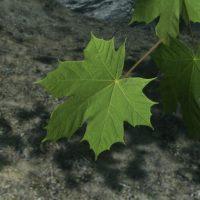 Skyrim - Реалистичный клён / Natural Maple