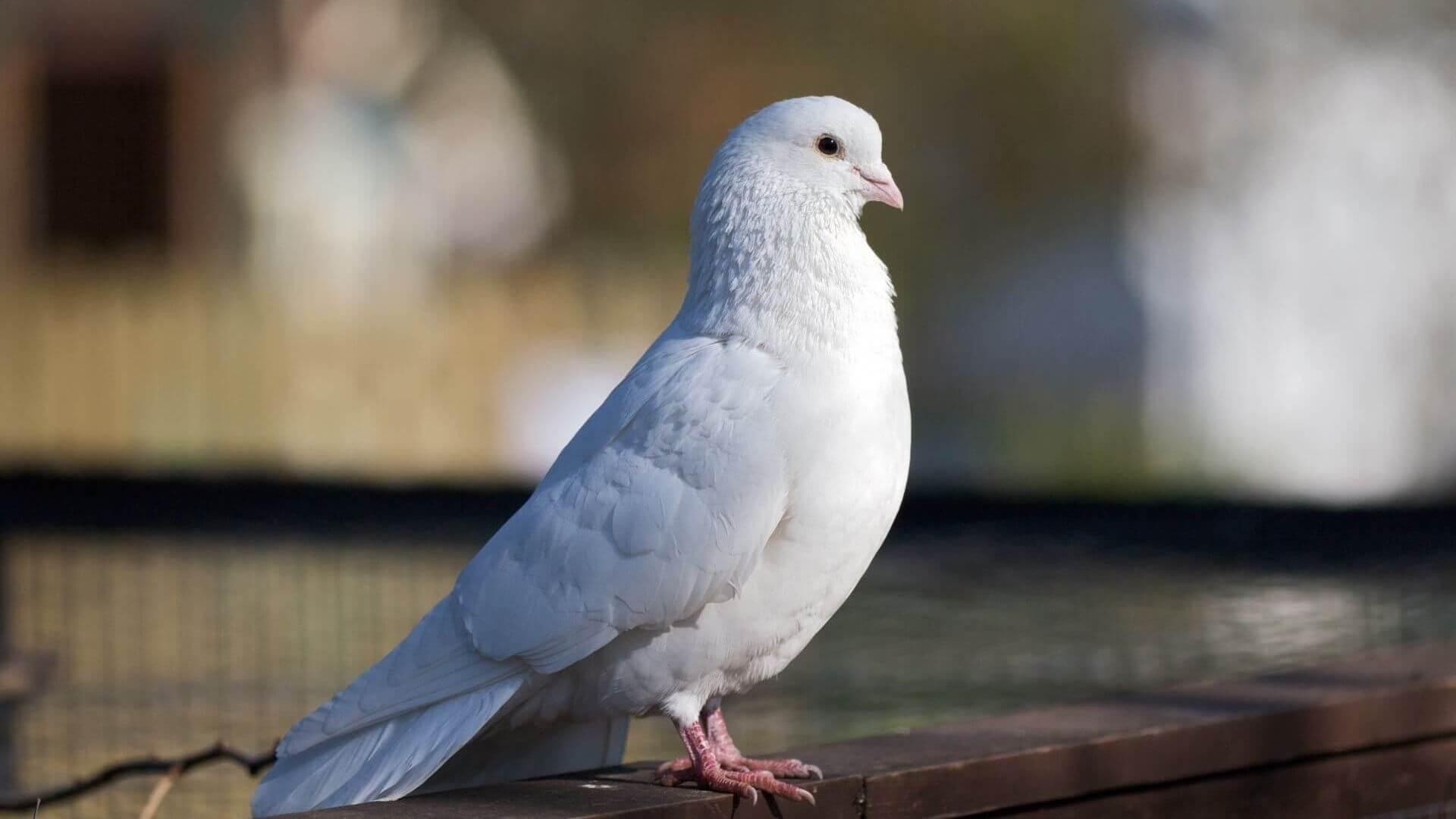 Garry's Mod 13 - Коллекция заставок с голубями