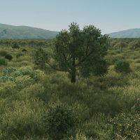 Cities: Skylines - Старое лиственное дерево